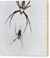 Garden Spider With Shadow Wood Print
