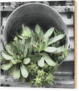 Garden Succulents Partial Color Wood Print
