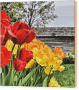Garden Tulips On A Cloudy Day Wood Print