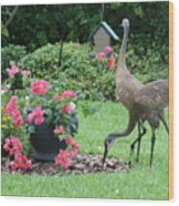 Garden Visitors Wood Print