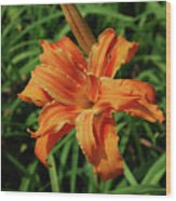 Garden With A Blooming Double Daylily Flowering Wood Print