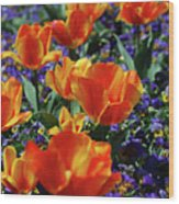 Garden With Blooming Yellow And Red Tulip Blossoms Wood Print