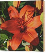 Garden With Lily Buds And A Blooming Orange Lily Wood Print
