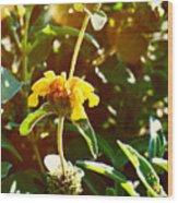 Garden Yellow Wood Print