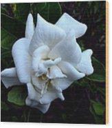 Gardenia 3 Wood Print