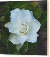 Gardenia 5 Wood Print