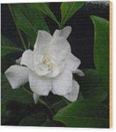 Gardenia Aromatic Wood Print