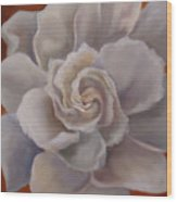 Gardenia  Bloom Wood Print