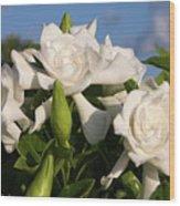 Gardenia Flowers Wood Print