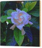 Gardenia Heart Warmth Wood Print