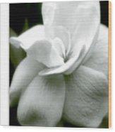 Gardenia Wood Print
