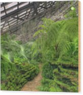 Garfield Park Conservatory Path Chicago Wood Print