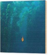 Garibaldi Fish In Giant Kelp Underwater Wood Print