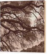 Garin Park Tree 2 Wood Print