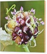 Garlic Top Wood Print