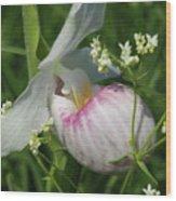 Garnished Showy Lady Slipper Wood Print