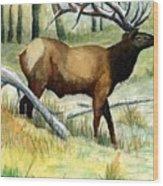 Gash Flats Bull Wood Print
