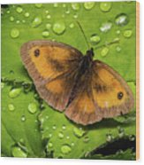 Gatekeeper Butterfly After The Rain. Wood Print
