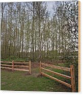 Gates To The Birch Wood Wood Print