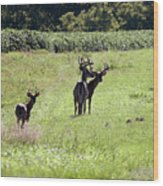 Gathering Of Bucks Wood Print