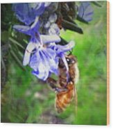 Gathering Rosemary Pollen Wood Print