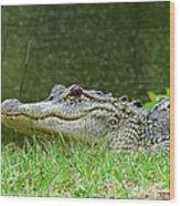 Gator 65 Wood Print