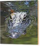 Gator And Dragonfly Wood Print