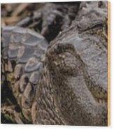 Gator Eye Wood Print