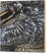 Gator Eye Wood Print