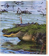 Gator Growl Wood Print