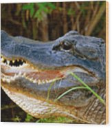 Gator Head Wood Print