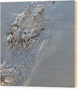 Gator IIi Wood Print
