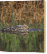Gator In Canal Wood Print