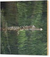 Gator In The Spring Wood Print