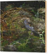 Gator Swamp Wood Print