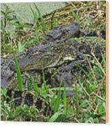 Gators 11 Wood Print