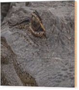 Gators Eye Wood Print