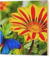 Gazania And Blue Butterfly Wood Print