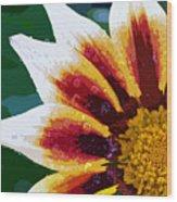 Gazania Flower Design Wood Print