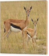Gazelle Mother And Child Wood Print