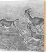 Gazelles Wood Print