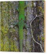 Gecko On Tree Bark Wood Print