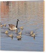 Geese And Goslings 3 Wood Print
