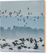 Geese And Gulls Wood Print