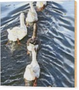 the Geese are leaving Wood Print