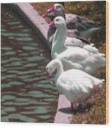 Geese At Guth Park Wood Print