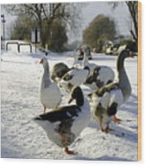 Geese At The Frozen Horninglow Basin Wood Print