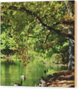 Geese By Pond In Autumn Wood Print