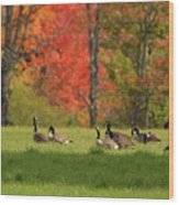 Geese In Autumn Wood Print