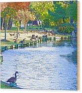 Geese In Pond 3 Wood Print